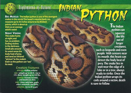 Indian Python front