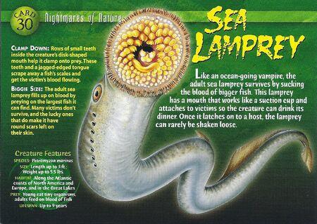 Sea Lamprey front