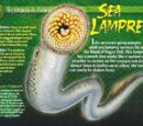 Sea Lamprey