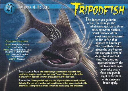 Tripodfish front