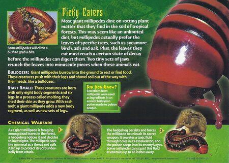 Giant Millipede back