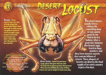 Desert Locust front