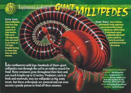 Giant Millipede front