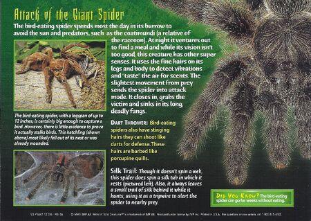 Bird-Eating Spider back