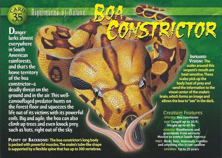 Boa Constrictor front