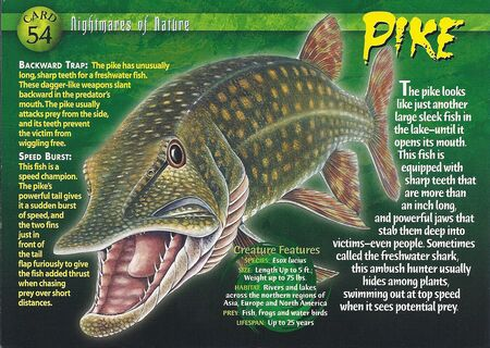 Pike front