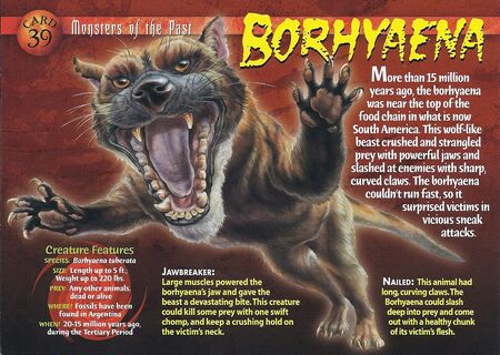 Borhyaena front