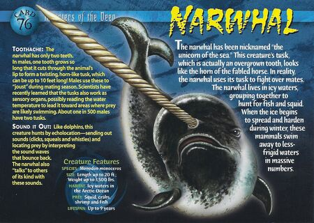 Narwhal front