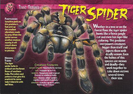 Tiger Spider front