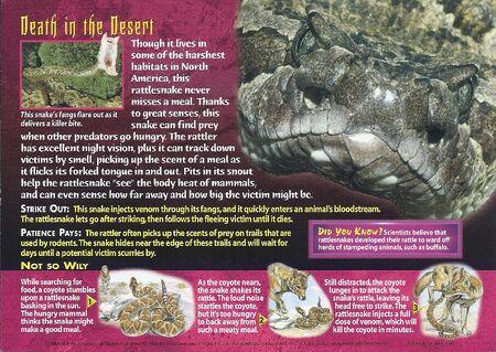 Western Diamondback Rattlesnake back