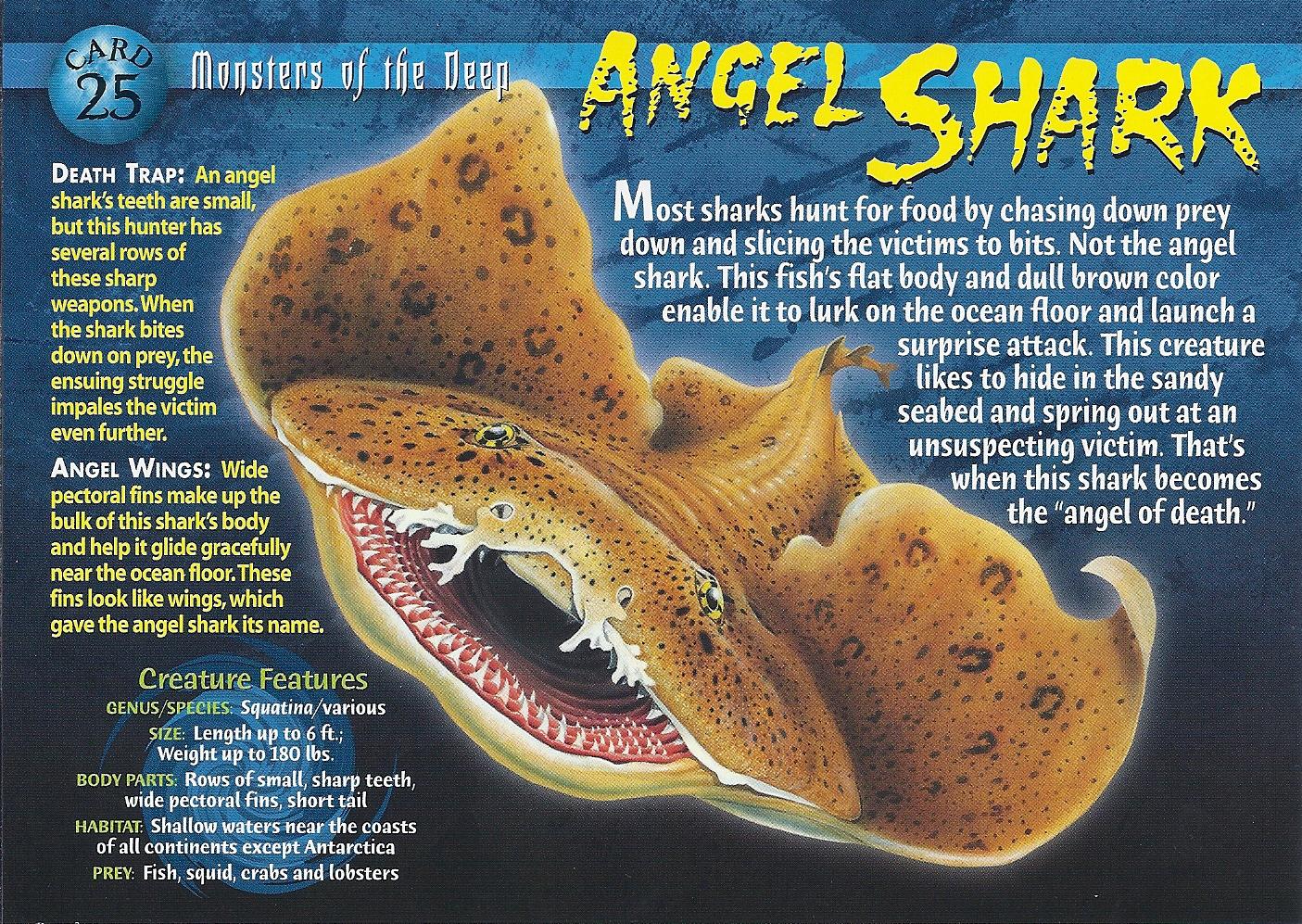 Angel Shark Weird N Wild Creatures Wiki Fandom