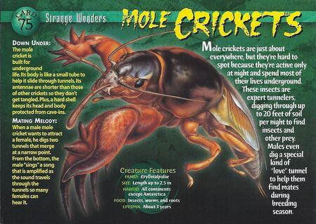 Mole Crickets front
