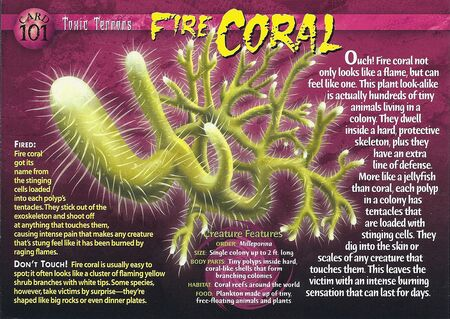 Fire Coral front