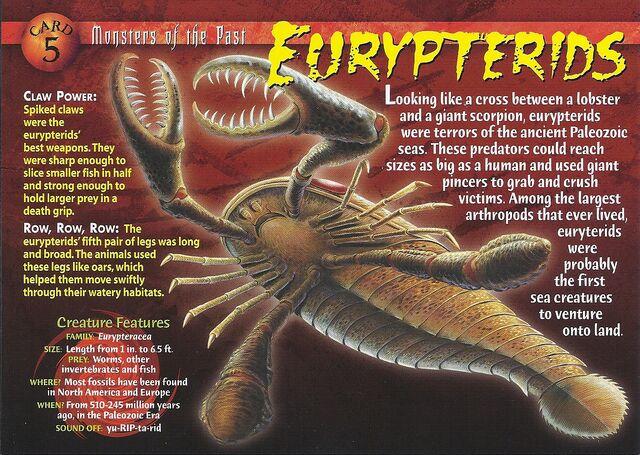 File:Eurypterid front.jpg
