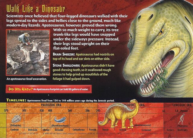 File:Apatosaurus back.jpg