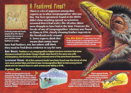 Compsognathus back