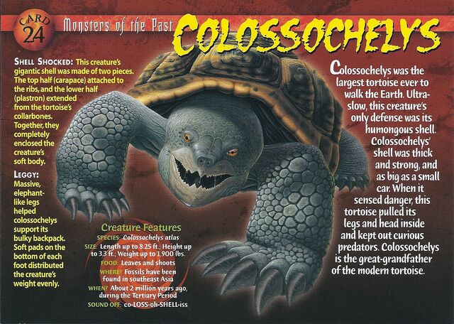 File:Colossochelys front.jpg