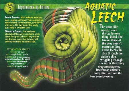 Aquatic Leech front