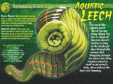 Aquatic Leech