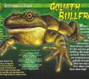 Goliath Bullfrog