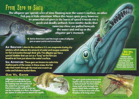 Good Back: Alligator Gar Back