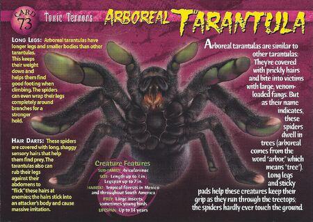 Arboreal Tarantula front