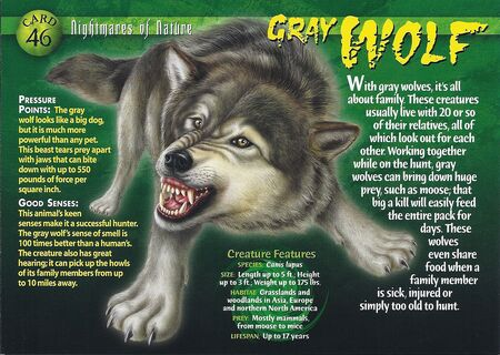 Gray Wolf front