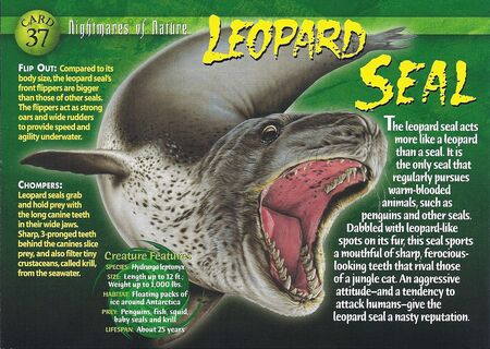 Leopard Seal front