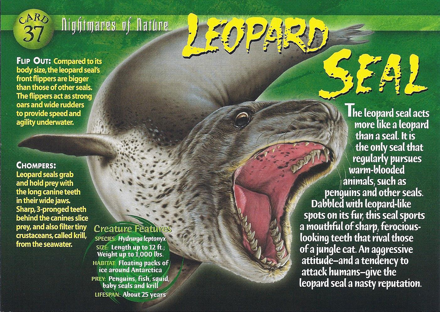 leopard seal weird n wild creatures wiki fandom