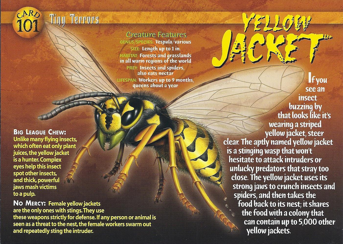 Yellow Jacket Killer