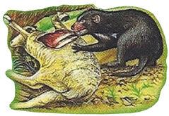 Tasmanian Devil Back Small 1