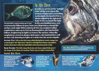 Hatchetfish back