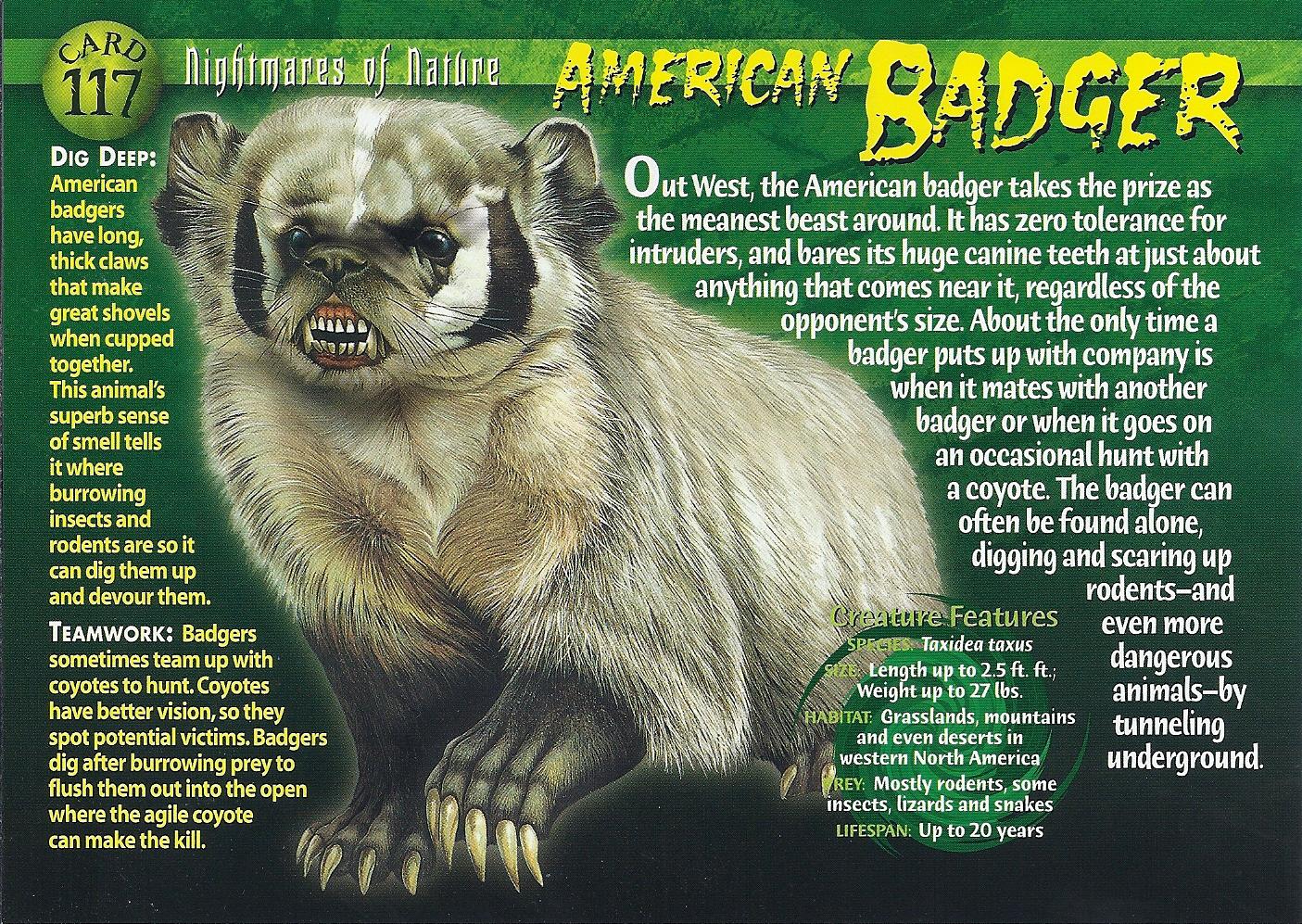American Badger | Weird n' Wild Creatures Wiki | Fandom