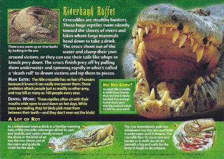Nile Crocodile back