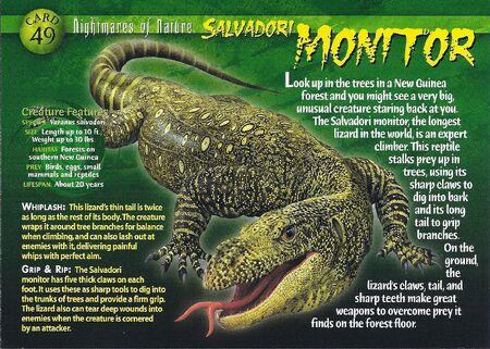 Salvadori Monitor front
