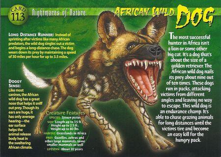 African Wild Dog front