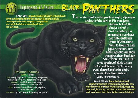 Black Panthers front