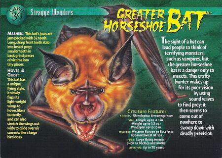 Greater Horeshoe Bat front