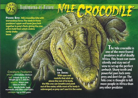 Nile Crocodile front
