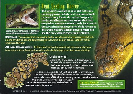 Reticulated Python back