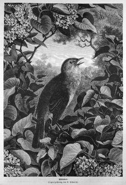 Die Gartenlaube (1874) b 415