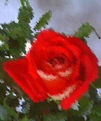 Kasyda Róży Ogród Petenery Fandom