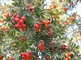 Jesień (Jesienin, przekł. Electron)