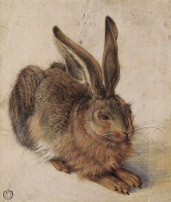 Hans Hoffmann Hare 1582