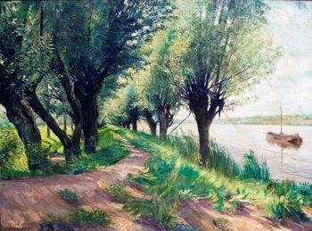 Willows by the Scheldt cut