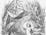 Dziecię elfów (Andersen, przekł. Mirandola)