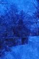 Zimą przed świtem