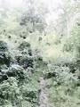 Mgła wśród zieleni - miniatura