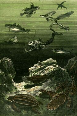'Twenty Thousand Leagues Under the Sea' by Neuville and Riou 075