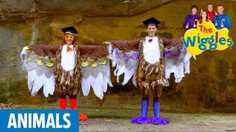 The Wiggles Do The Owl